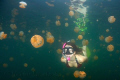 Swimming with jellies in Palau's famous jellyfish lake.