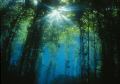 Sunflare.  A glimpse of the sun through the kelp forest at Anacapa Island from 2001.  Shot with a Nikonos V and 15mm lens in natural light at f/5.6 and 1/80 second.