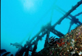 Wreck of the Almajane off Atlantis resort. Nikonos V 20mm lense.  It was the one really sunny day we had.
