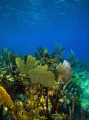 The beautiful Coral Sea Garden in Bimini, Bahamas.