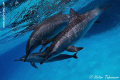 Sweet Dolphins!!