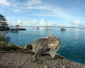 Iguana, dive boats, a morning full of promise... Bonaire