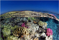 It was the end of a very nice dive in Tiran and everybody went back to the dive boat. However I just could not resist the beauty of the reef under the perfect sunny day. I decided to go a little bit creative. Daylight shot coupled with UW Flash :)