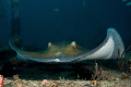 Stingray encounter on the 