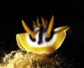 nudibranch - RedSea - Sharm -  Ixus75
