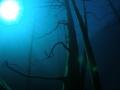 Bosque sumergido en el Lago Traful Patagonia