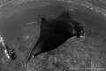 Mantaray at Bali, Nusa Penida.
