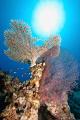 Beautifull coral taken in Ras Ghozlani, Ras mohammed.