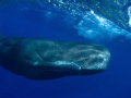 Mr Big. 