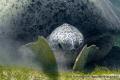 Tortue verte Mayotte
