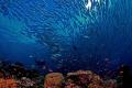 underwater paradıse