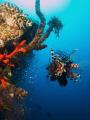 lionfish at the el mina wreck