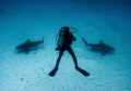 Bull sharks in Mexico, which way to go?