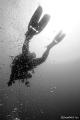 B&W Diver www.h2o.org.il