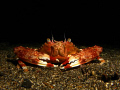 Photographed this little fella whilst on a night dive in Lembeh. Canon G9