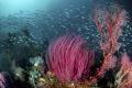 Raja Ampat reef scene