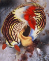 Nudibranch laying egg ribbon. 