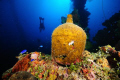 Jug on Wreck, Truk Lagoon