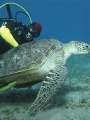 Igor - the best diver I know, and a turtle in Abu Dabbab, Egypt; Canon 720is with 2 x Inon Z240