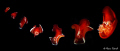 Tango......