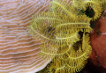 Feather Star and coral