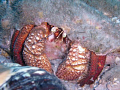 Hermit Crab. Taken at Blue Heron Bridge in West Palm Beach. Used a Olympus Stylus 6000 with a Olympus housing ( no strobe ).