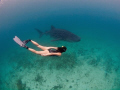 Amazing snorkel dive together with a whaleshark and a uw-model.