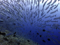 Perfect Symmetry.