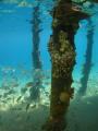 Taken under the pier.  Neweiba 2010