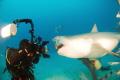 Bull shark up close and personal