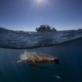 Vessel Venture 4 meets whaleshark! Another easy subject off ningaloo in great vis!