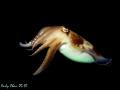 Cuttle Fish - Padang Bai, Bali Canon S 90 + SB 105