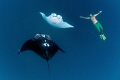 Free diving with mantas scooping up delicious plankton in shallow waters in Fiji (Yasawa islands). Shoot downwards just below the surface while free diving, everything naturally lit by the sun from above. Nikon D300 with 10,5 fish eye, no strobes.