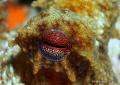Ocotpus Eye