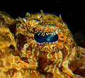 I just love the patterns in crcodile fish eyes and well bahaved subjects too