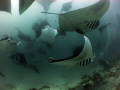 Mantas Mantas!! 100 or so Manta's in a vortex of feeding frenzy. An amazing diving experience. Canon Ixus 85is and Inon Fisheye.