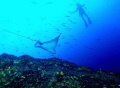 A cruising eagle ray at Cocos Island gets the attention of an inquisitive diver.