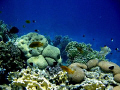 Sea coral&fish-Red sea