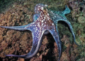 OCTOPUS @ THE NATURAL BEACH AGUADILLA PR