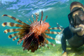 self portrait with the lionfish