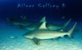 This School Rocks!  Bull Sharks