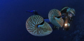 Chambered Nautilus