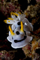 Curious nudi