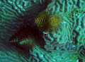 Christmas Tree Worms - Image Cropped