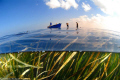 posidonia seagrass meadows_Libya