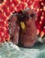 Baby Octopus was hiding under a starfish at Blue Heron Bridge, Riviera Beach, Florida