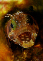 With an attitude of a Jack Russell... ferocious