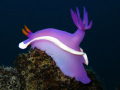 Loud and Proud!