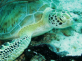 Turtle on Turtle reef - funny old thing that :-) !!!!