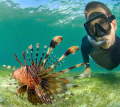 chasing the Lionfish